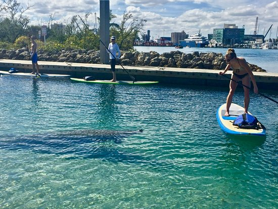 High Point Paddle Adventures: Making friends