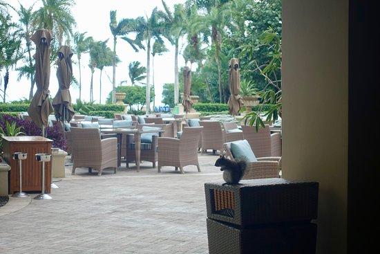 The Ritz-Carlton Key Biscayne, Miami: Eichhörnchen