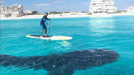 Eco-Hotel El Rey Del Caribe: El pez mas grande de mundo en Cancun