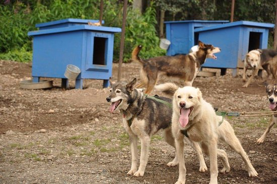 Willow, AK: kennel
