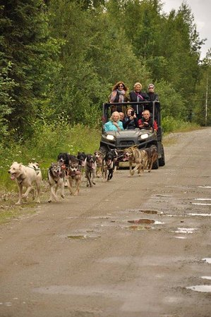 Willow, AK: our with huskies