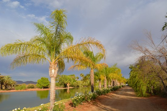 Augrabies Falls National Park, Sudáfrica: Palm lined driveway from Manor House back towards the main Lodge