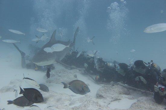 Phantom Divers: Static dive, 80'