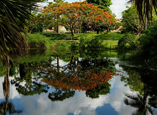 Mounts Botanical Garden Royal Poinciana Overlooking Lake Orth