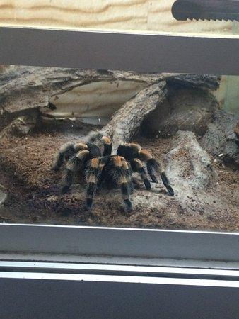 Nikolaev Zoo: паучок