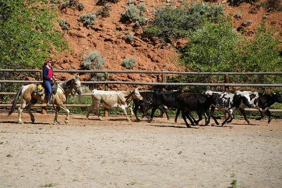 Foto de CM Ranch