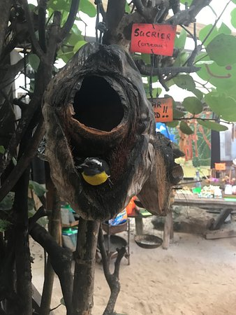 Oyster Pond, St. Maarten/St. Martin: On PInel Island, we saw these sweet little birds at a local shop.