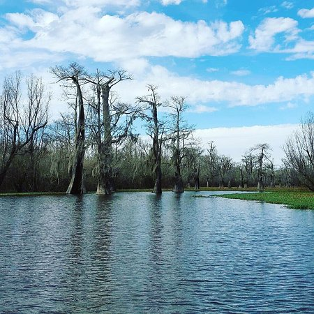Plaquemine, Луизиана: The Last Wilderness Swamp Tour