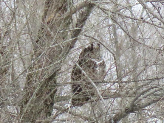 Colusa, Kalifornien: Saw an owl in the trees