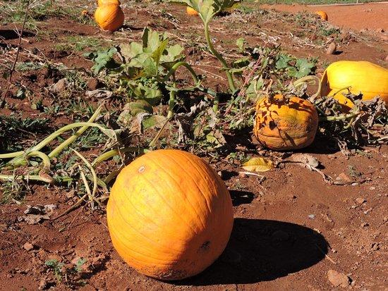 Kids Inc.: Pumpkin patch