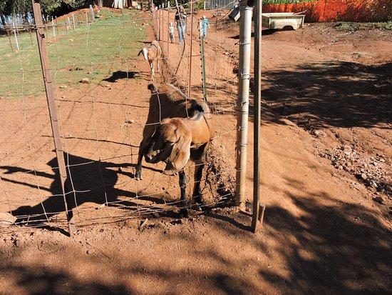 Kids Inc.: Animals not a petting zoo