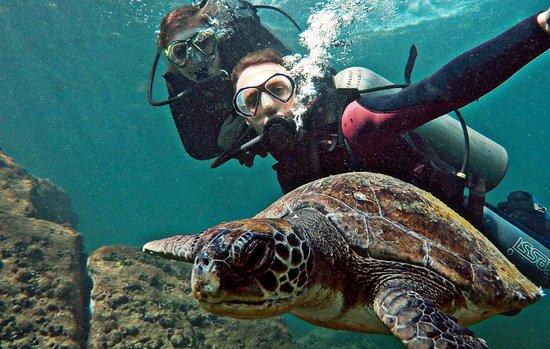PL Divers