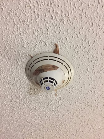 La Quinta Inn & Suites Tampa Fairgrounds - Casino : Plastic bag placed over the smoke detector - UNREAL!