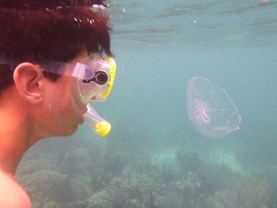 بونتا جوردا, بليز: Snorkeling near Lime Caye
