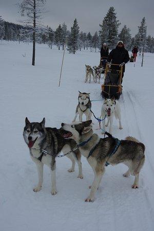 Idre, Suécia: Mitt ute på fjället. Ivriga hundar vill bara dra