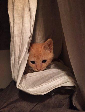 Стари Град, Хорватия: Dave, our new stray kitten