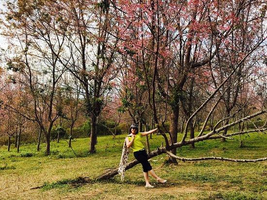 Dan Sai, Thailand: 风景如画,令人如痴如醉