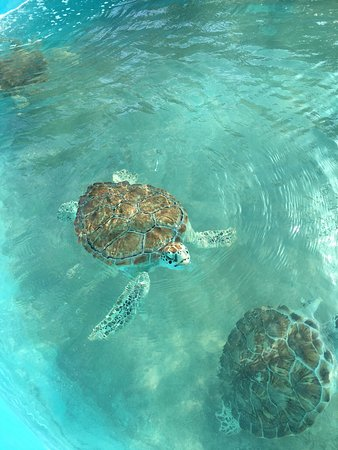 Playa Norte: Turtle Farm