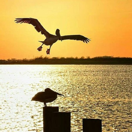 Lake Charles, LA: Pelican Landing- Sunset at Calcasieu Point