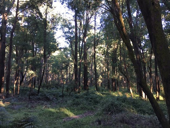 Stringybark Creek Photo