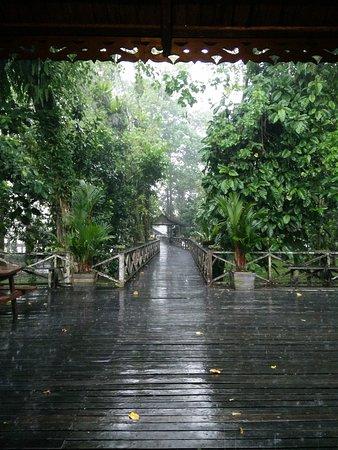 Район Кинабатанган, Малайзия: IMG_20170130_144735_large.jpg