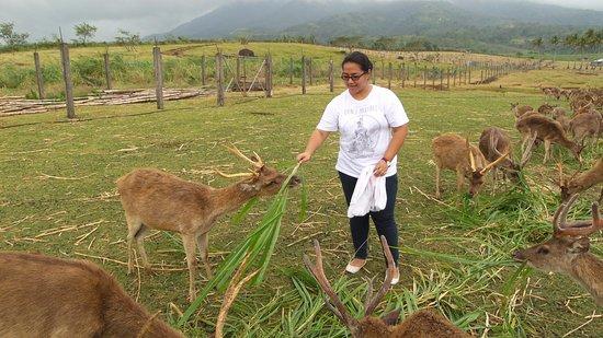 Бикольский регион, Филиппины: Deer Farm in Ocampo, Camarines Sur