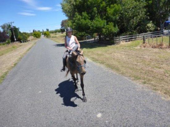 Clive, Nueva Zelanda: Riding Nugget along the road!