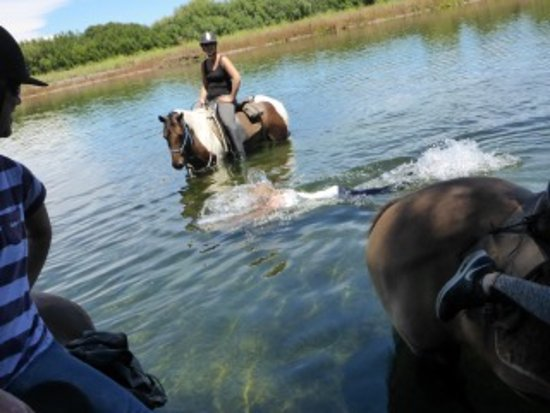 Clive, New Zealand: Horses & Mum in the lake!