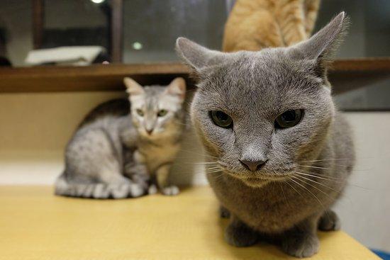 Cat Cafe Calico Shinjuku