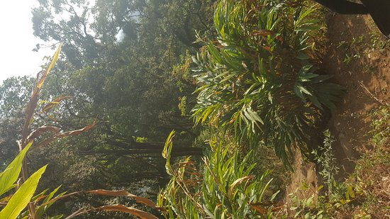 Windermere Estate: 20170119_162035_large.jpg