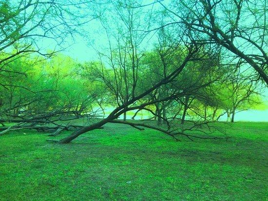 Commit error. beautiful green nature