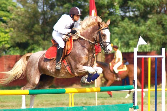 Vagholi, India: Get your adrenaline pumping! Be a show jumper! Advanced coaching at Pune Equestrians.