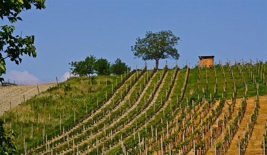 Winery Valka