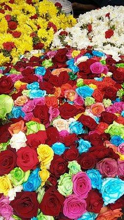 Basavanagudi: Different variety of roses