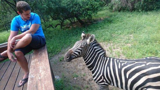 Marloth Park, Sydafrika: La terrasse