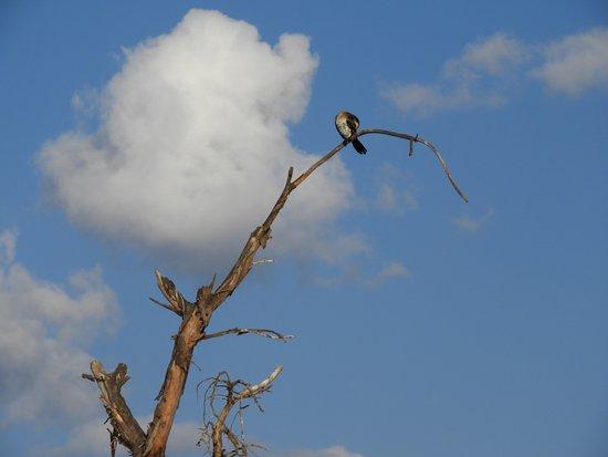 Rift Valley Province, เคนยา: 鳥