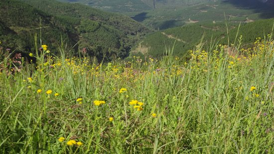 Lydenburg, South Africa: More plant down the mountain