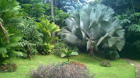 Petit-Bourg, Guadalupe: vue du parc