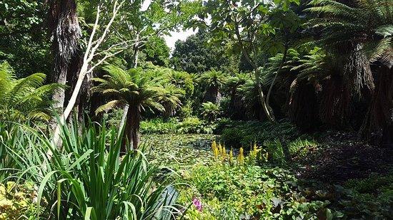 New Plymouth, Nieuw-Zeeland: Pond