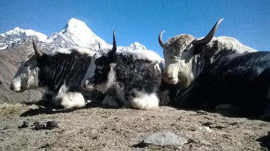 Nepal Trekking Pro