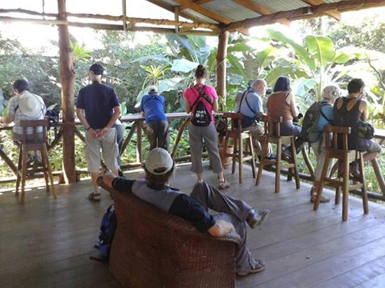 Dave & Dave's Costa RIca Nature Pavilion Park: Enjoy viewing wild birds as they fly in from the rainforest
