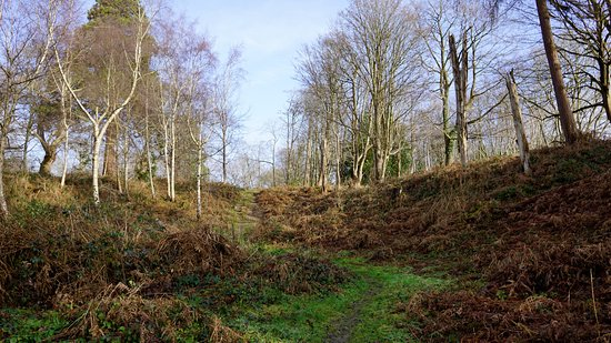 Hothfield, UK: walk through the trees