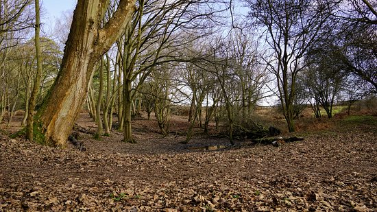Hothfield Heathlands Nature Reserve: in the woods