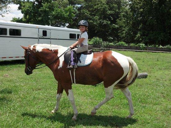 Highland Horse Farm