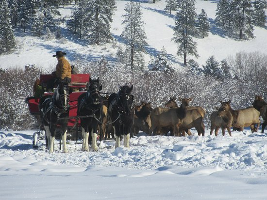Garden Valley, ID: Get the chance to see wild elk up close on our family friendly sleigh rides