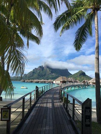 In Love with Four Seasons Bora Bora