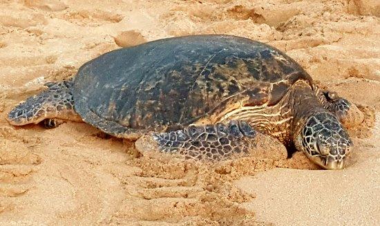 Hale Mahina Beach Resort: 20161201_175153_large.jpg