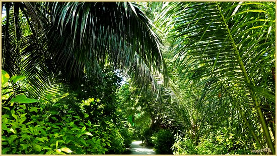 Veligandu Island Resort & Spa: Die Insel als tropischer Garten