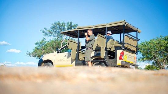 Kruger Ulusal Parkı, Güney Afrika: The game drive vehicle and guide