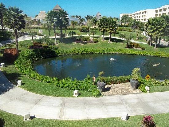 Jardin central picture of iberostar playa mita punta de for Central jardin rosiere